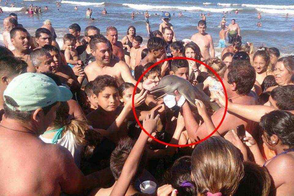 delfin baby stirbt