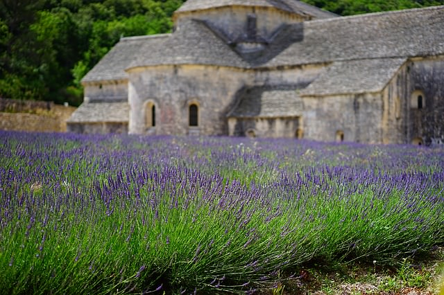 Backpacking in Frankreich - Lavender