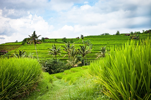 Bali Klima