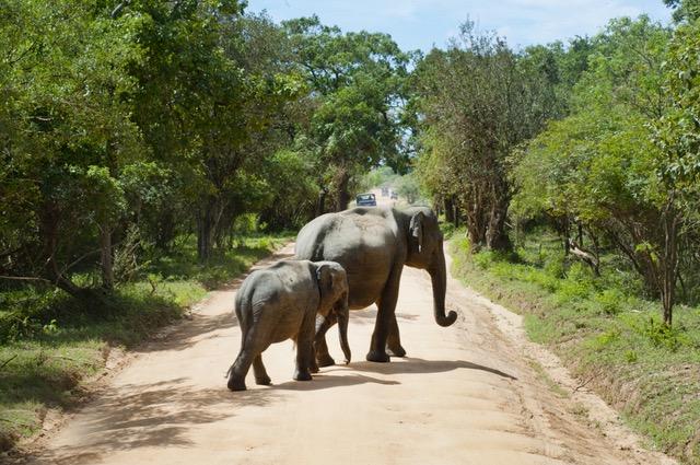 Safari Südafrika - Südafrika Selbstfahrer