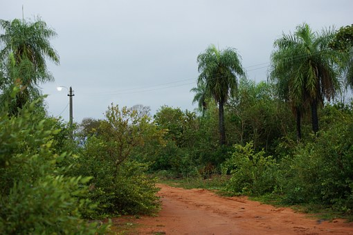 Dschungellandschaft Paraguay