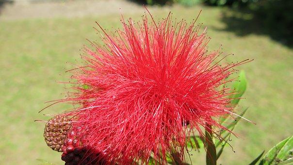 einzigartige Flora in Tansania