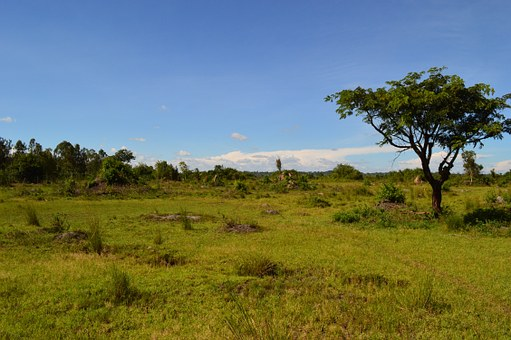 Steppenlandschaft in Uganda