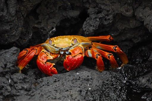 Galapagosinseln Naturwunder