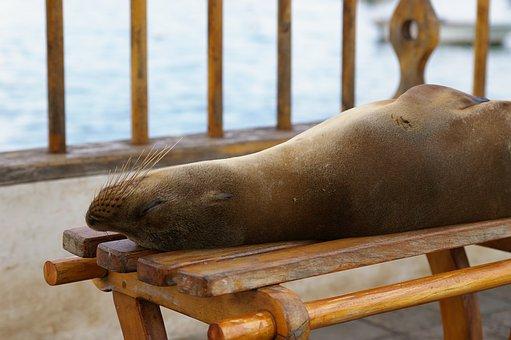 Seelöwen auf den Galapgosinseln