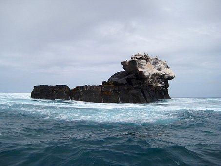 Vogelfelsen der Galapagosinseln